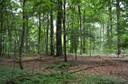 Bois du Laerbeek IV