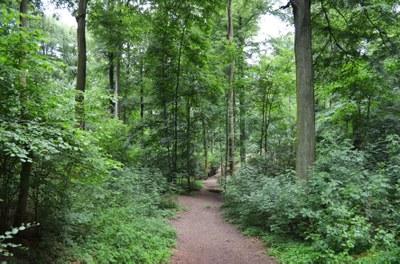 Bois du Laerbeek III