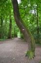 Het Laarbeekbos II